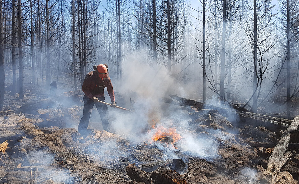 500 new jobs in wildfire protection image
