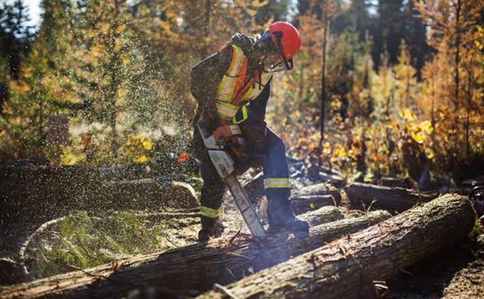 New opportunities for forestry workers image